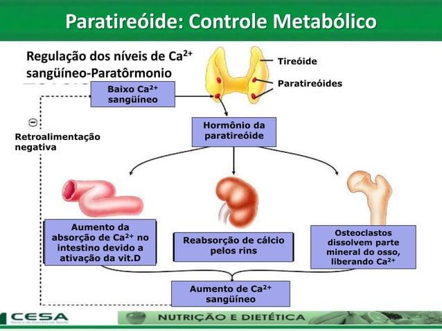 Regulação dos níveis de Ca2+ sangüíneo-Paratôrmonio Paratireóides Tireóide Retroalimentação negativa Aumento da absorção d...