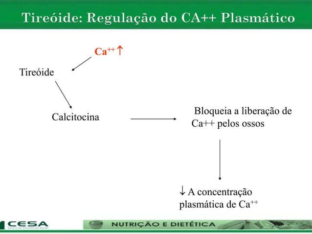 Tireóide Ca++  Calcitocina Bloqueia a liberação de Ca++ pelos ossos  A concentração plasmática de Ca++