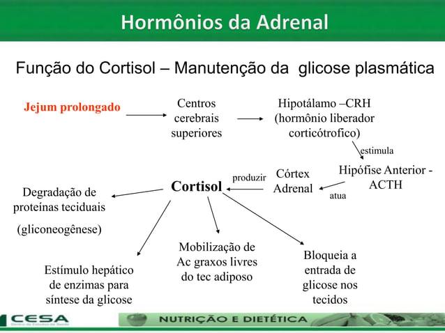 Jejum prolongado Centros cerebrais superiores Hipotálamo –CRH (hormônio liberador corticótrofico) Hipófise Anterior - ACTH...