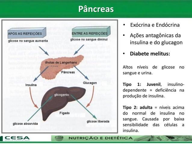 • Ações antagônicas da insulina e do glucagon • Exócrina e Endócrina • Diabete melitus: Altos níveis de glicose no sangue ...