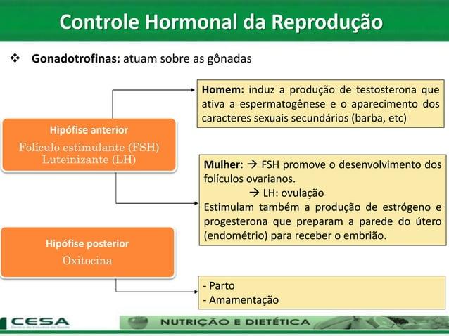 Controle Hormonal da Reprodução Hipófise anterior Folículo estimulante (FSH) Luteinizante (LH) Homem: induz a produção de ...