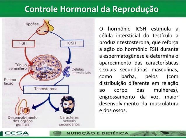 Controle Hormonal da Reprodução O hormônio ICSH estimula a célula intersticial do testículo a produzir testosterona, que r...