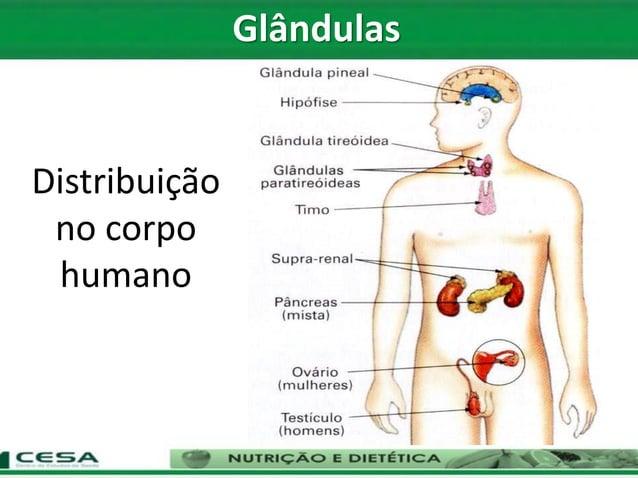 Distribuição no corpo humano Glândulas