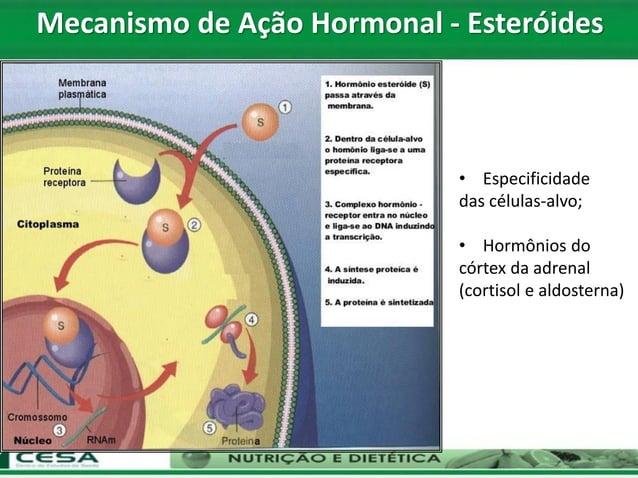 • Especificidade das células-alvo; • Hormônios do córtex da adrenal (cortisol e aldosterna) Mecanismo de Ação Hormonal - E...
