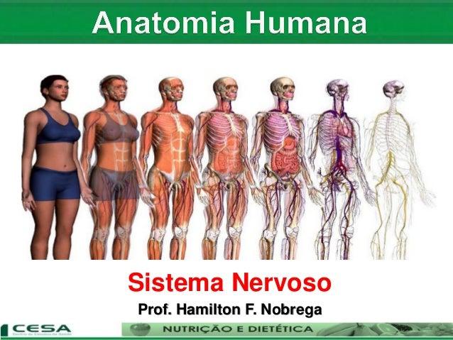 Sistema Nervoso Prof. Hamilton F. Nobrega