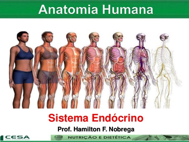 Aula 07 sistema endócrino - anatomia e fisiologia