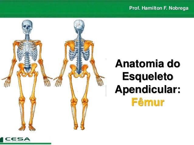Prof. Hamilton F. Nobrega Anatomia do Esqueleto Apendicular: Fêmur