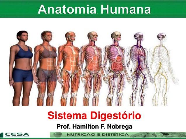 Sistema Digestório Prof. Hamilton F. Nobrega