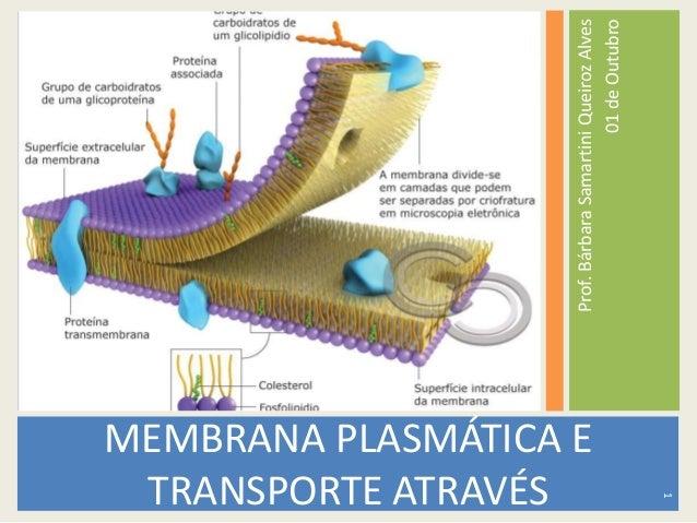 Prof.BárbaraSamartiniQueirozAlves 01deOutubro MEMBRANA PLASMÁTICA E TRANSPORTE ATRAVÉS 1