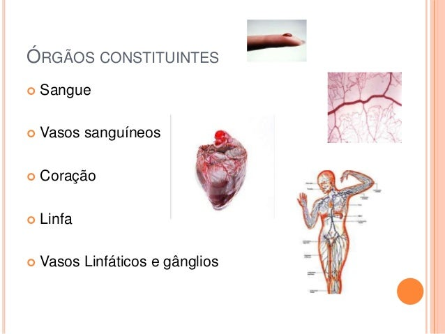 ÓRGÃOS CONSTITUINTES   Sangue    Vasos sanguíneos    Coração    Linfa    Vasos Linfáticos e gânglios