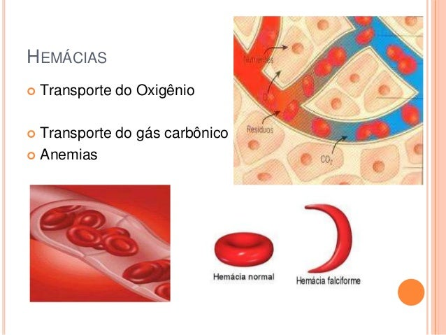 HEMÁCIAS   Transporte do Oxigênio  Transporte do gás carbônico  Anemias 