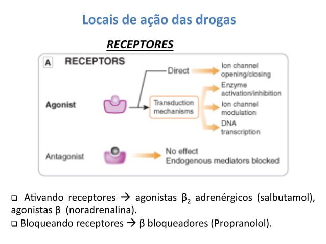 Locais  de  ação  das  drogas   RECEPTORES    q    AOvando   receptores   à   agonistas   β2   ...