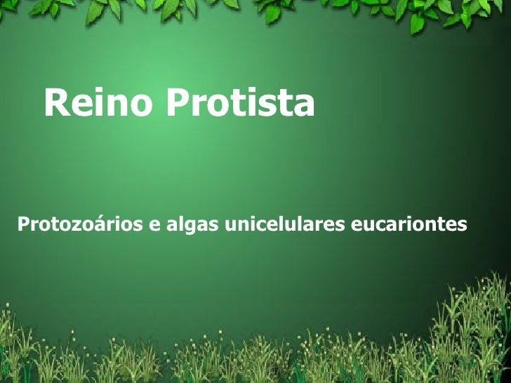 Reino Protista  Protozoários e algas unicelulares eucariontes