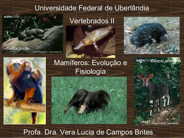 Universidade Federal de Uberlândia Vertebrados II Mamíferos: Evolução e Fisiologia Profa. Dra. Vera Lucia de Campos Brites...