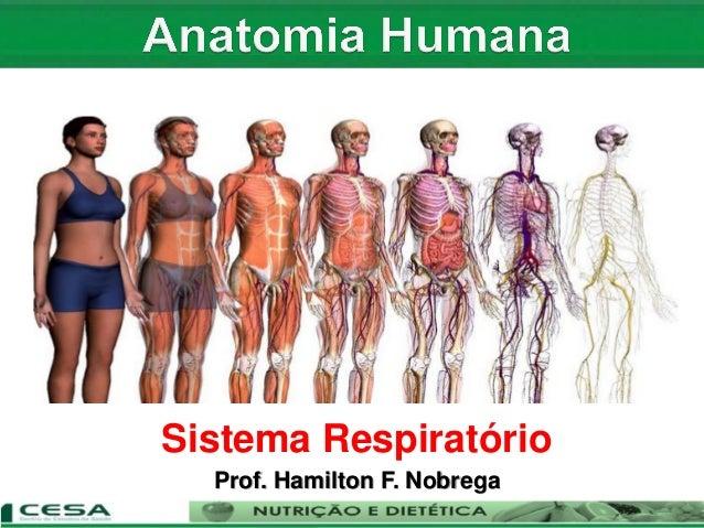 Sistema Respiratório Prof. Hamilton F. Nobrega