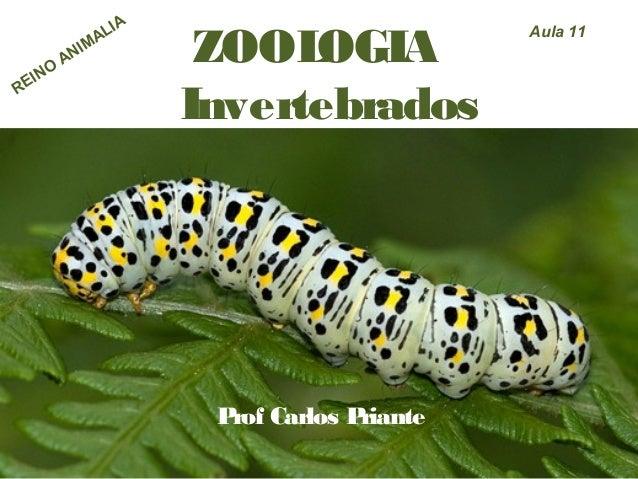 ZOOLOGIA Invertebrados Prof Carlos Priante Aula 11 REINO ANIMALIA