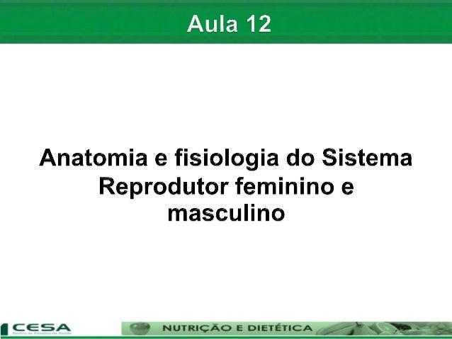 Aula 12   sistema reprodutor masculino e feminino - anatomia e fisiologia Slide 2