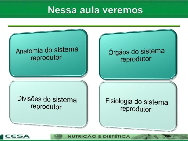 Aula 12   sistema reprodutor masculino e feminino - anatomia e fisiologia Slide 3