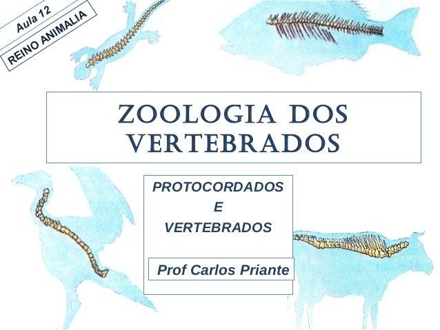 Zoologia dos Vertebrados PROTOCORDADOS E VERTEBRADOS Prof Carlos Priante Aula 12 REINO ANIMALIA