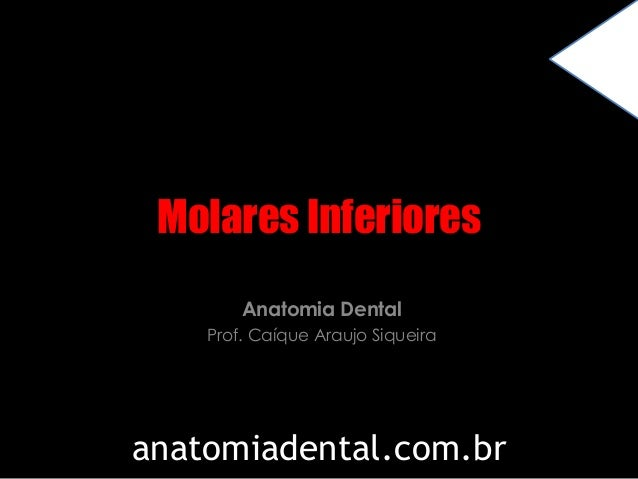 Molares Inferiores  Anatomia Dental  Prof. Caíque Araujo Siqueira  anatomiadental.com.br