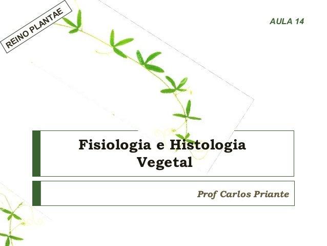 Fisiologia e Histologia Vegetal Prof Carlos Priante REINO PLANTAE AULA 14
