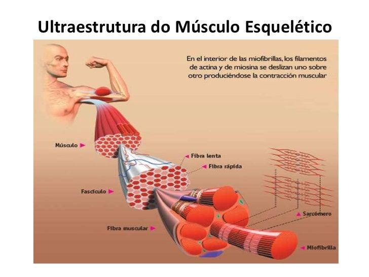 Aula 1 Musculos Esqueléticos