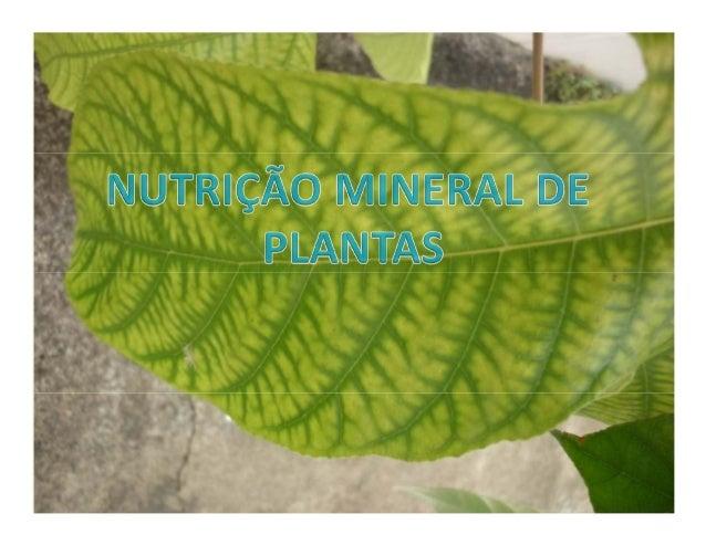 IDENTIFICAÇÃOIDENTIFICAÇÃODisciplina Nutrição mineral de plantas Código 210403Pré-requisito(s)210203 e 210550 Cargahorária...
