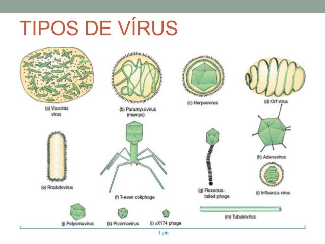a look at three types of viruses A history of computer viruses -the famous 'trio' these three incidents presented us with two different h j highland/a history of computer viruses.