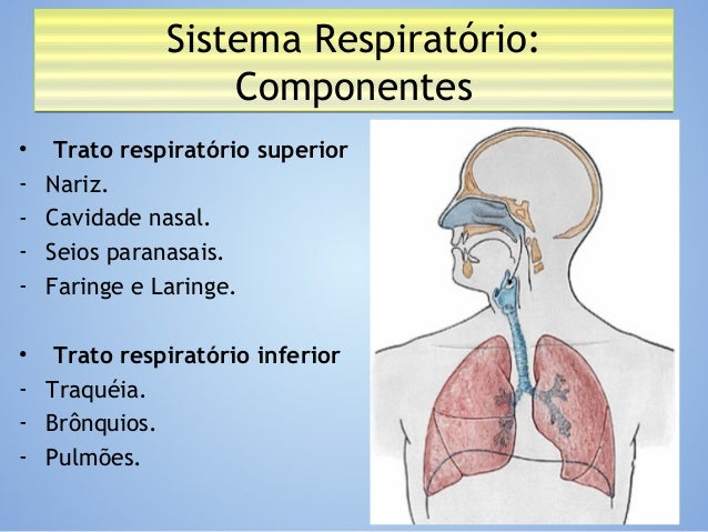 Anatomia - Sistema Respiratório