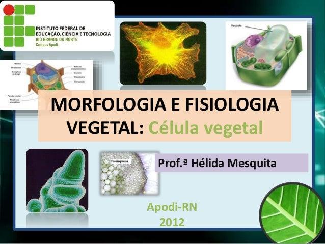 Apodi-RN 2012 MORFOLOGIA E FISIOLOGIA VEGETAL: Célula vegetal Prof.ª Hélida Mesquita