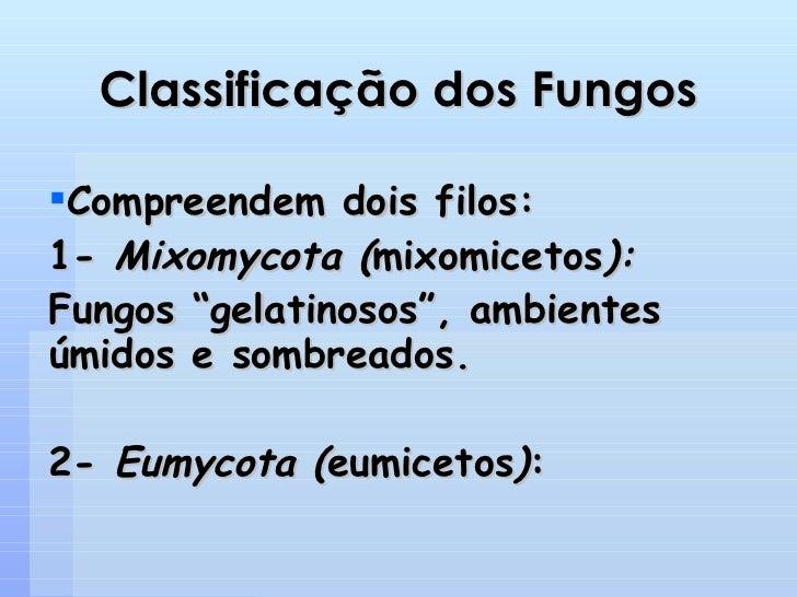 Classificação dos Fungos <ul><li>Compreendem dois filos: </li></ul><ul><li>1-  Mixomycota ( mixomicetos ): </li></ul><ul><...