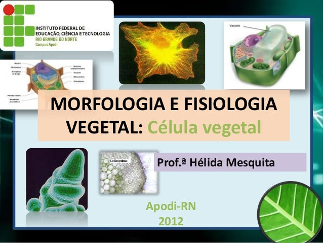 MORFOLOGIA E FISIOLOGIA VEGETAL: Célula vegetal           Prof.ª Hélida Mesquita          Apodi-RN            2012