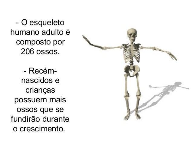 - O esqueleto humano adulto é composto por 206 ossos. - Recém- nascidos e crianças possuem mais ossos que se fundirão dura...