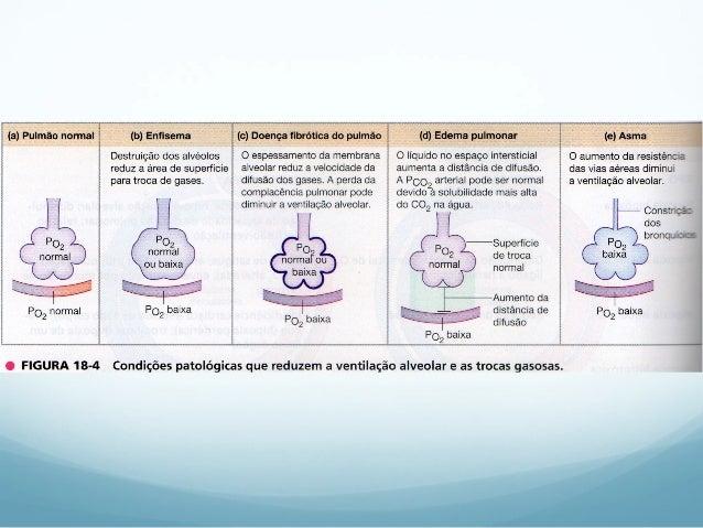 Fisiologia - Sistema Respiratório 2