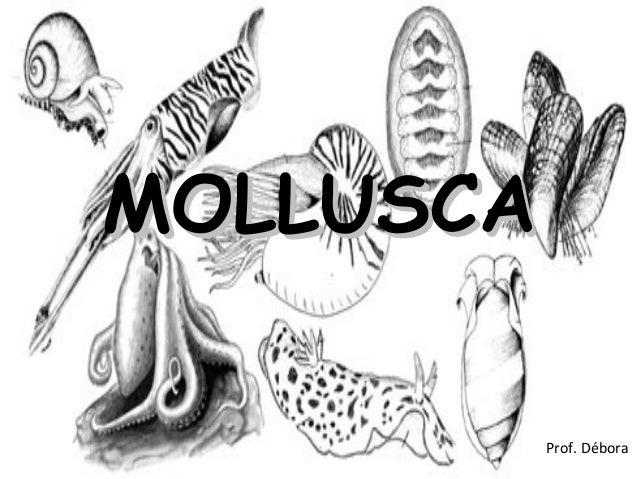 MOLLUSCAClique para editar o estilo do subtítulo mestre                                                  Prof. Débora