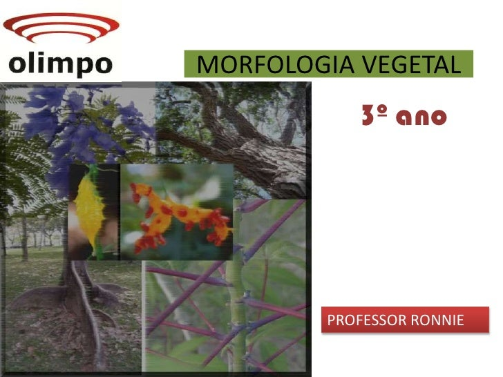 MORFOLOGIA VEGETAL<br />3º ano<br />PROFESSOR RONNIE<br />