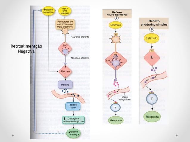 Glândula HipófiseGlândula Hipófise