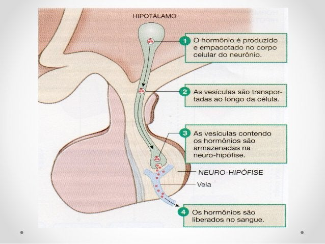 Hormônios da ADENO-hipófiseHormônios da ADENO-hipófise • Prolactina • TSH – Hormônio Tireóideo Estimulante • ACTH – Hormôn...