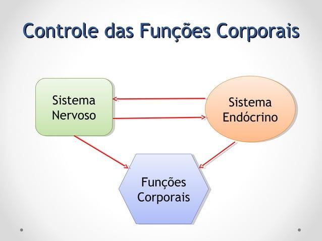 Controle das Funções CorporaisControle das Funções Corporais Sistema Nervoso Sistema Nervoso Funções Corporais Funções Cor...