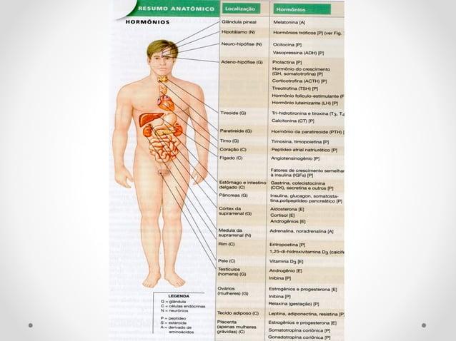 """HormônioHormônio Grego = significa """"excitar"""" e """"estimular"""" Mensageiros Químicos produzidos por uma célula (ou grupo de cél..."""