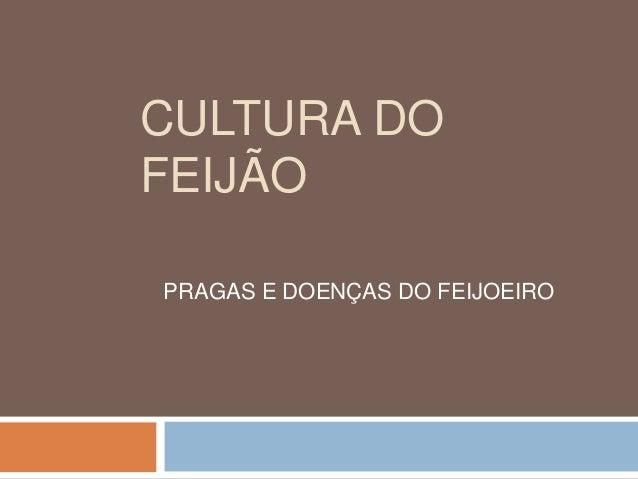 CULTURA DO  FEIJÃO  PRAGAS E DOENÇAS DO FEIJOEIRO