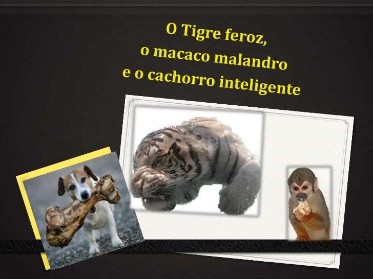 O Tigre feroz, <br />o macaco malandro <br />e o cachorro inteligente<br />
