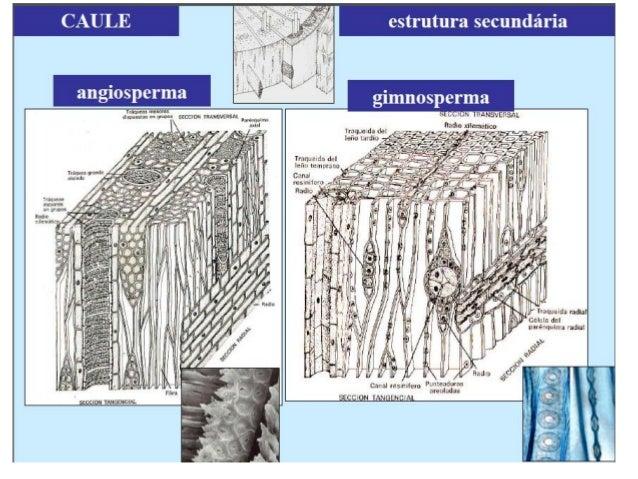 Tipos Celulares Da Madeira