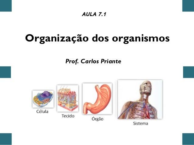 Organização dos organismos AULA 7.1 Prof. Carlos Priante