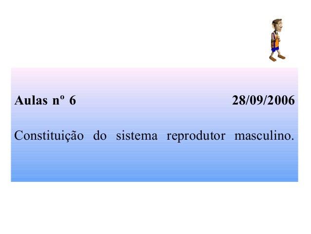 Aulas nº 6 28/09/2006 Constituição do sistema reprodutor masculino.