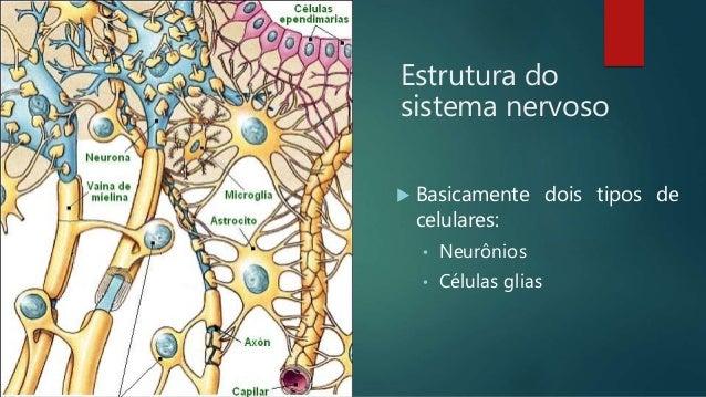 Aula 8 Anatomia I Sistema Nervoso Fama
