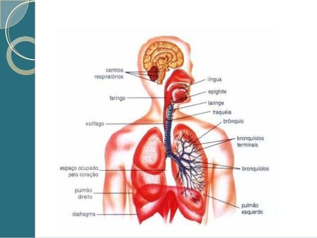 Fisiologia e Anatomia Básica