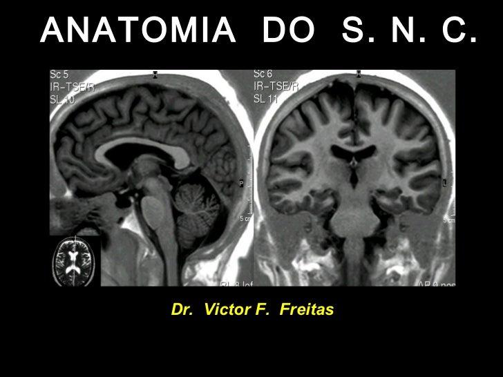 ANATOMIA DO S. N. C.     Dr. Victor F. Freitas