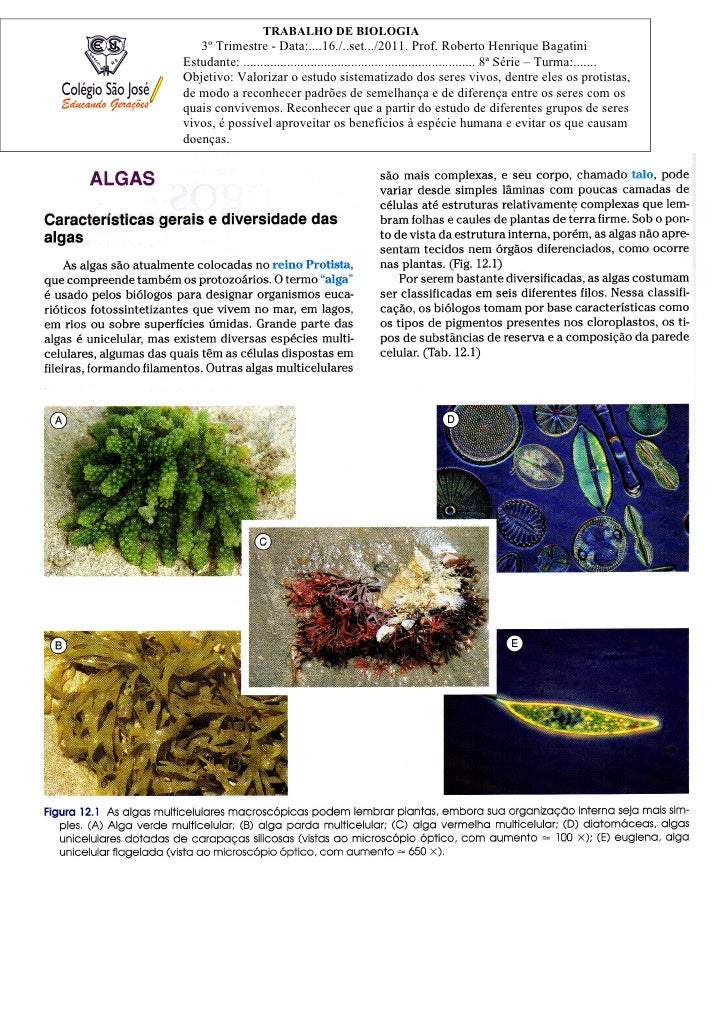TRABALHO DE BIOLOGIA   3º Trimestre - Data:....16./..set.../2011. Prof. Roberto Henrique BagatiniEstudante: .................