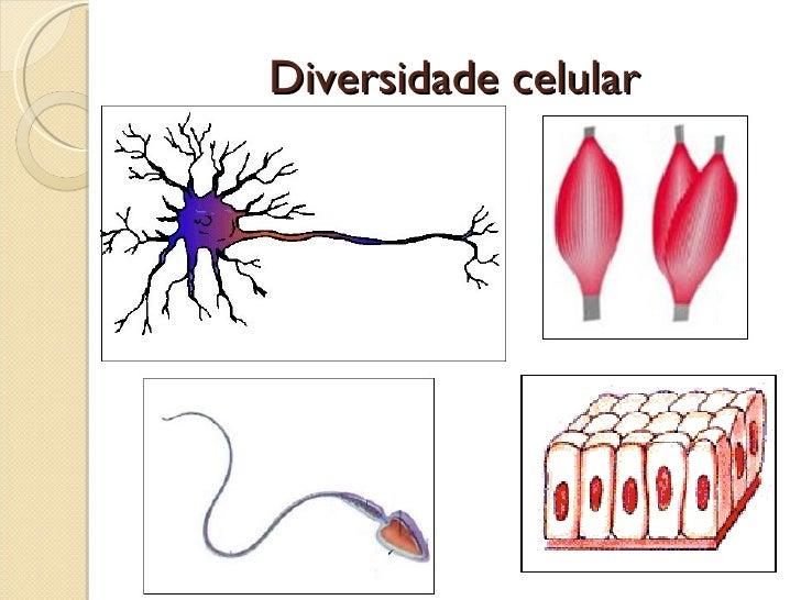 Diversidade celular